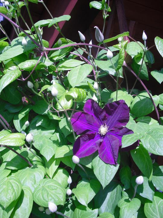 Zahrada a okolí - Obrázek č. 40