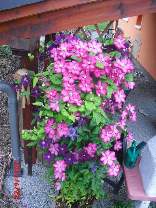 Zahrada a okolí - Obrázek č. 41