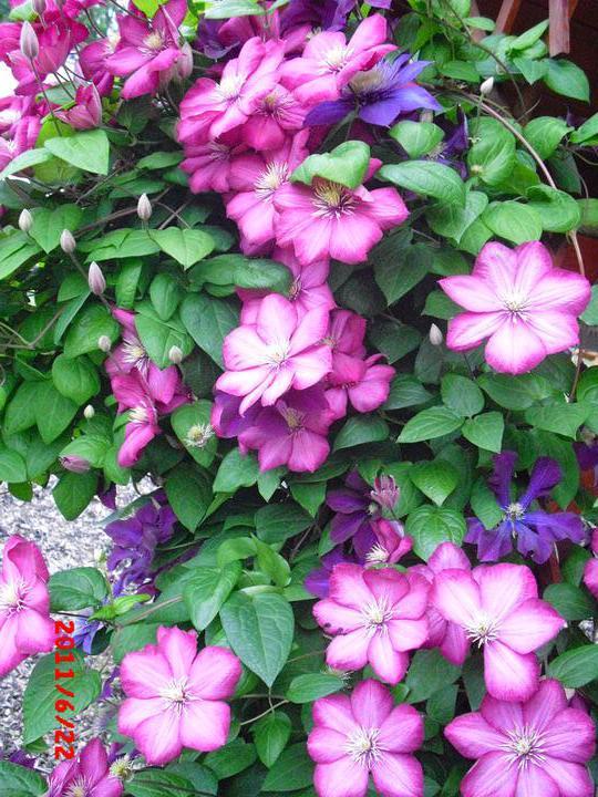 Zahrada a okolí - Obrázek č. 42