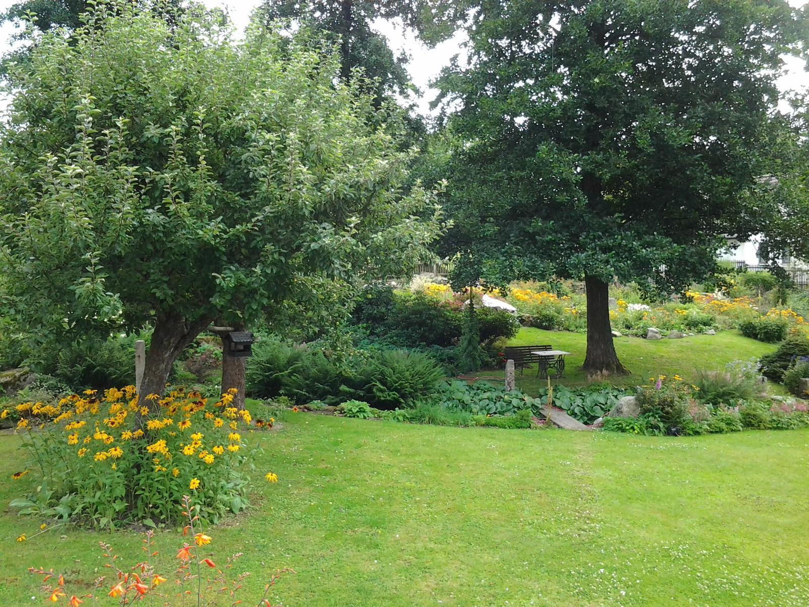 Jihočeská venkovská zahrada. - Třapatky se samy nastěhovaly i pod jabloň.
