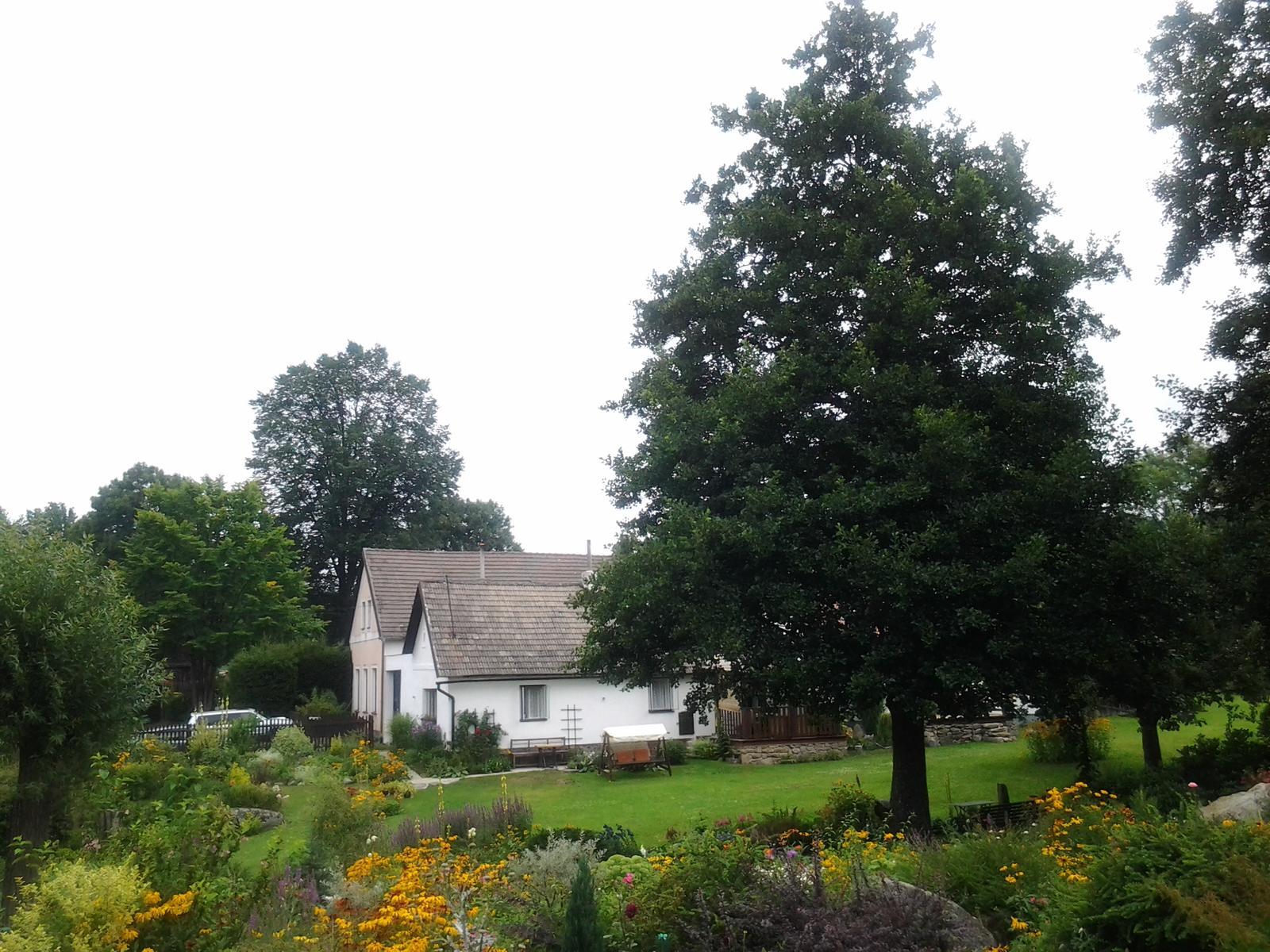 Jihočeská venkovská zahrada. - Královna zahrady-olše lepkavá.
