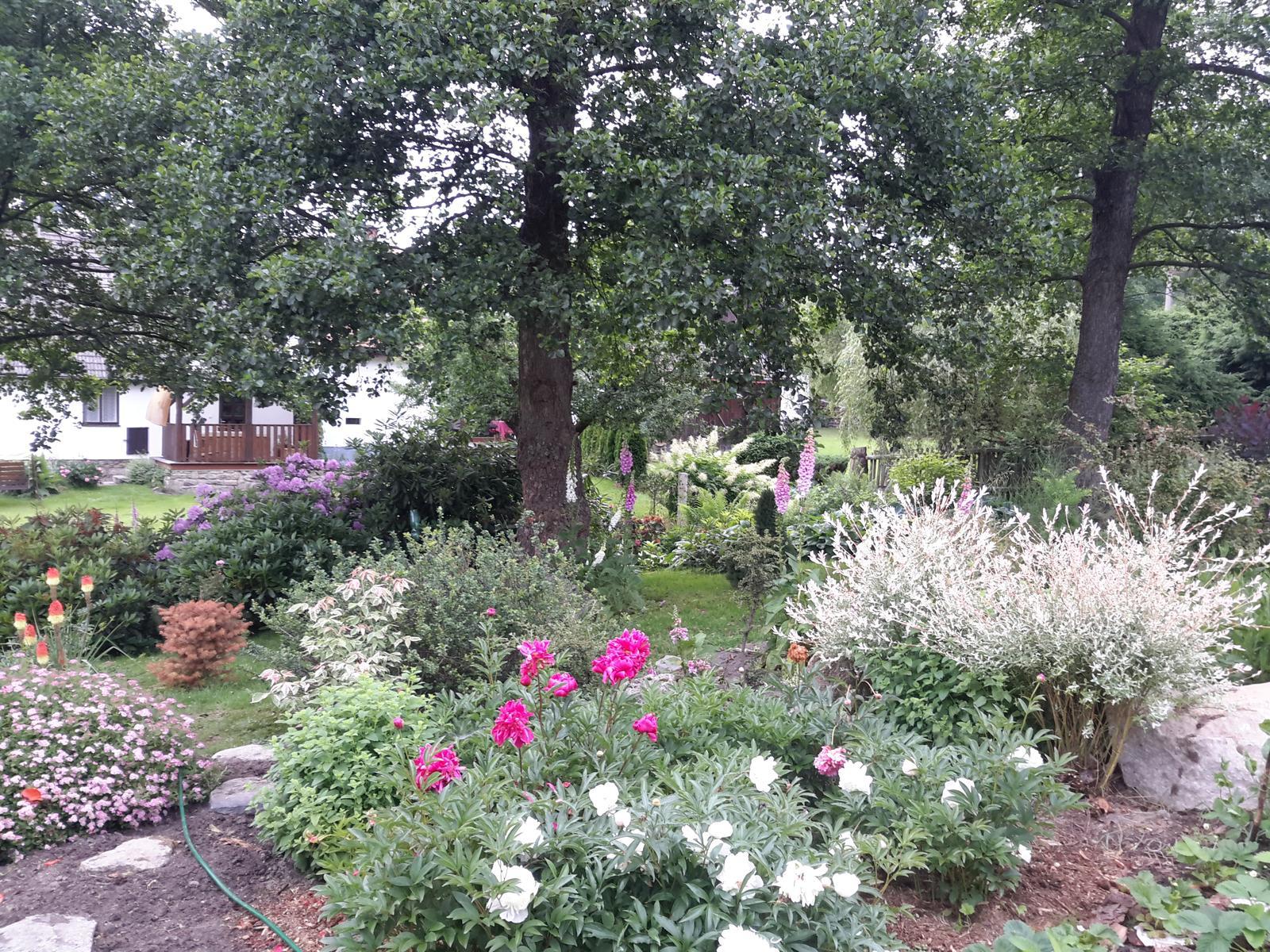 Jihočeská venkovská zahrada. - Pivoňky s jap.vrbou