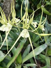 Flora ve skleníku.