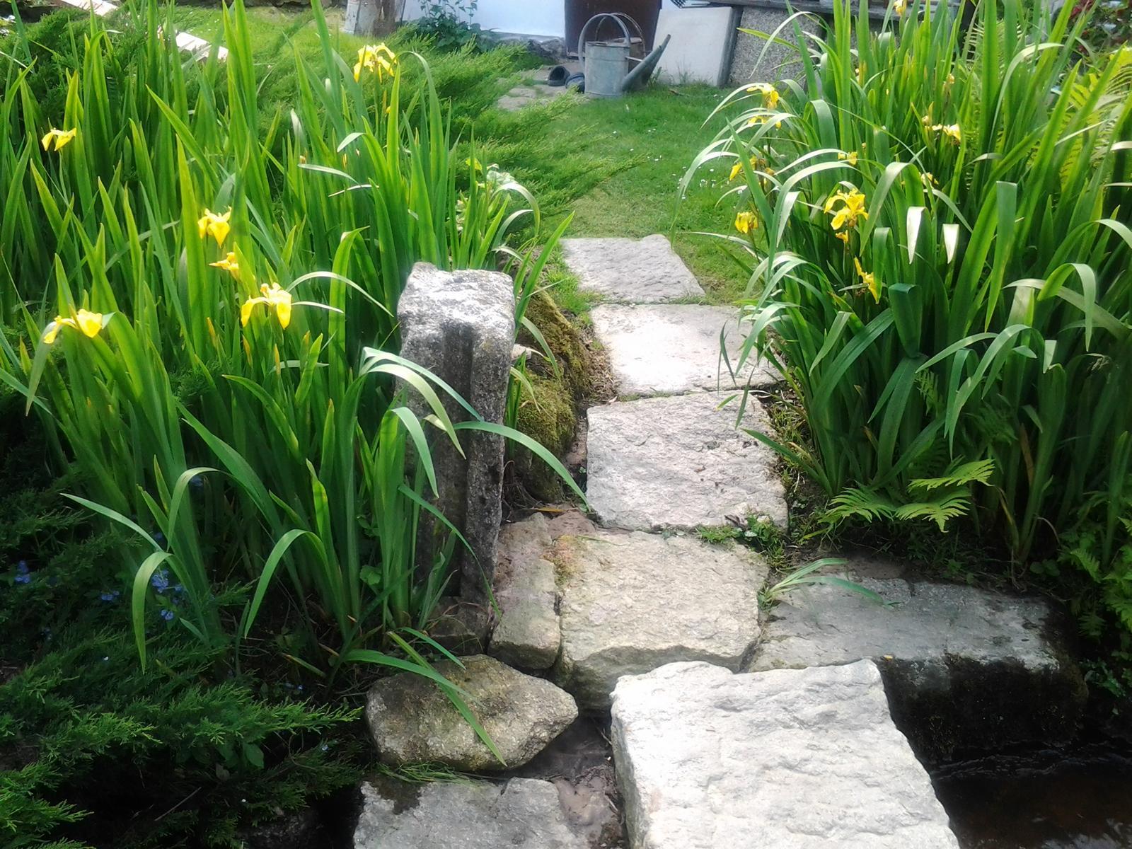 Jihočeská venkovská zahrada. - Kosatec žlutý miluje vodu.Kamenný můstek přes potok.