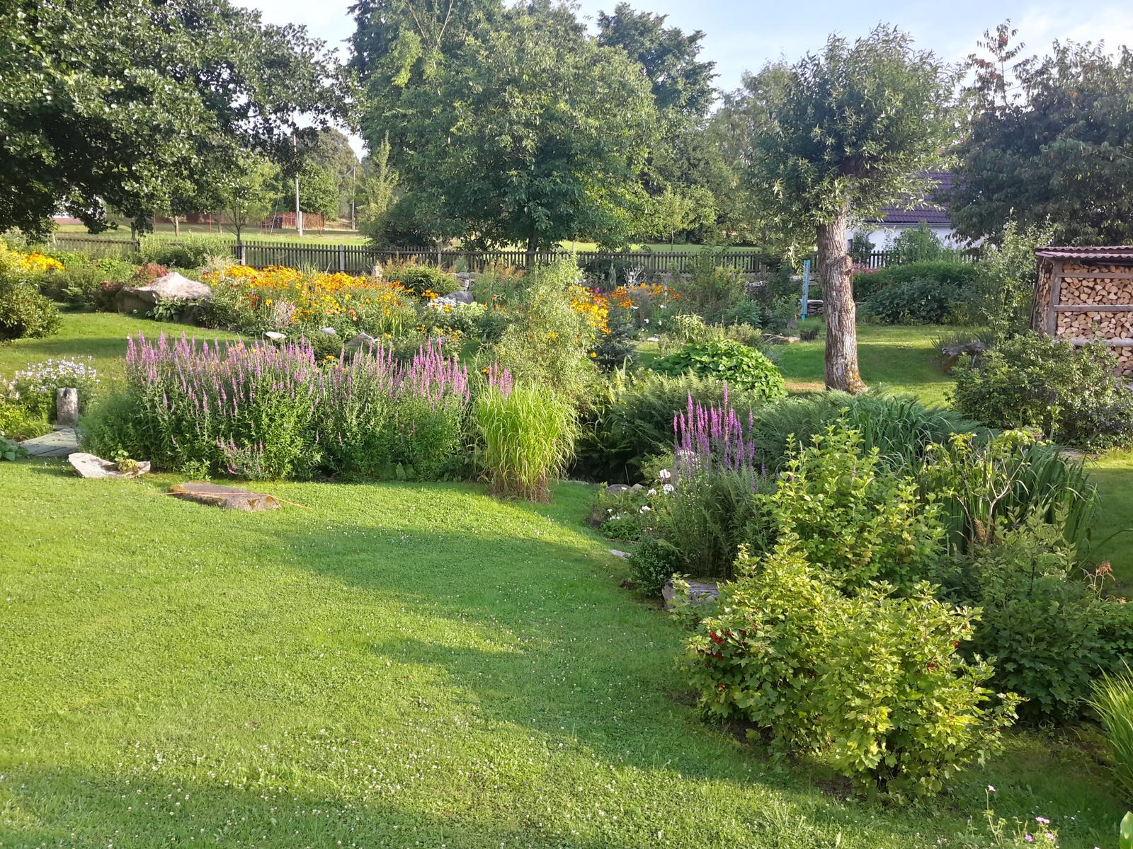 Jihočeská venkovská zahrada. - Kyprej musím zredukovat,těžko se odstraňuje tam,kde se vysemení.