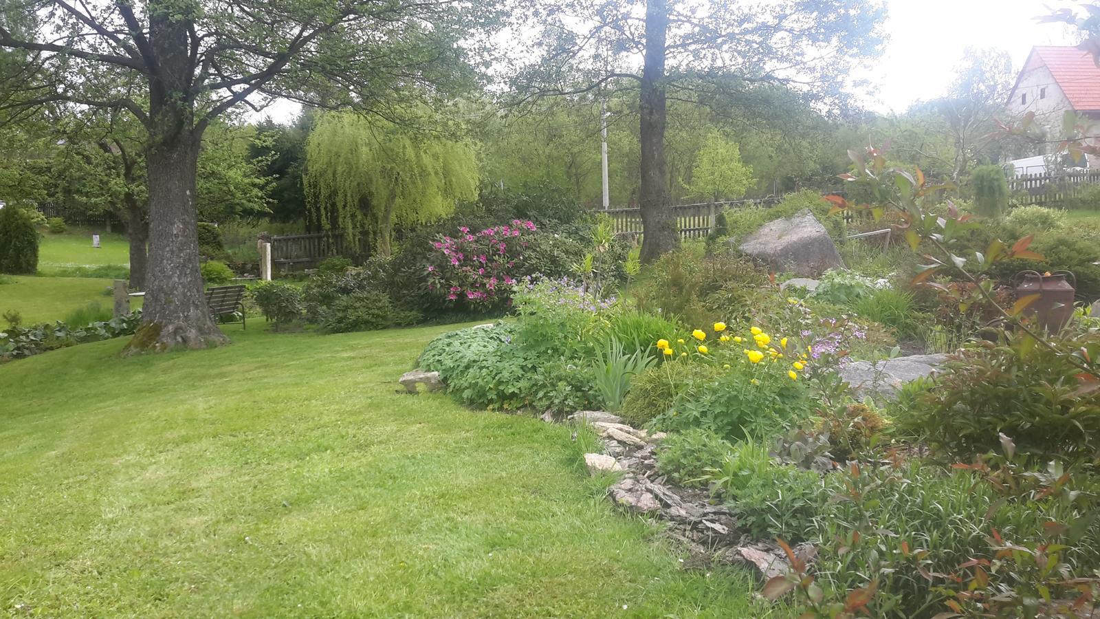 Jihočeská venkovská zahrada. - První rododendrony se představují.