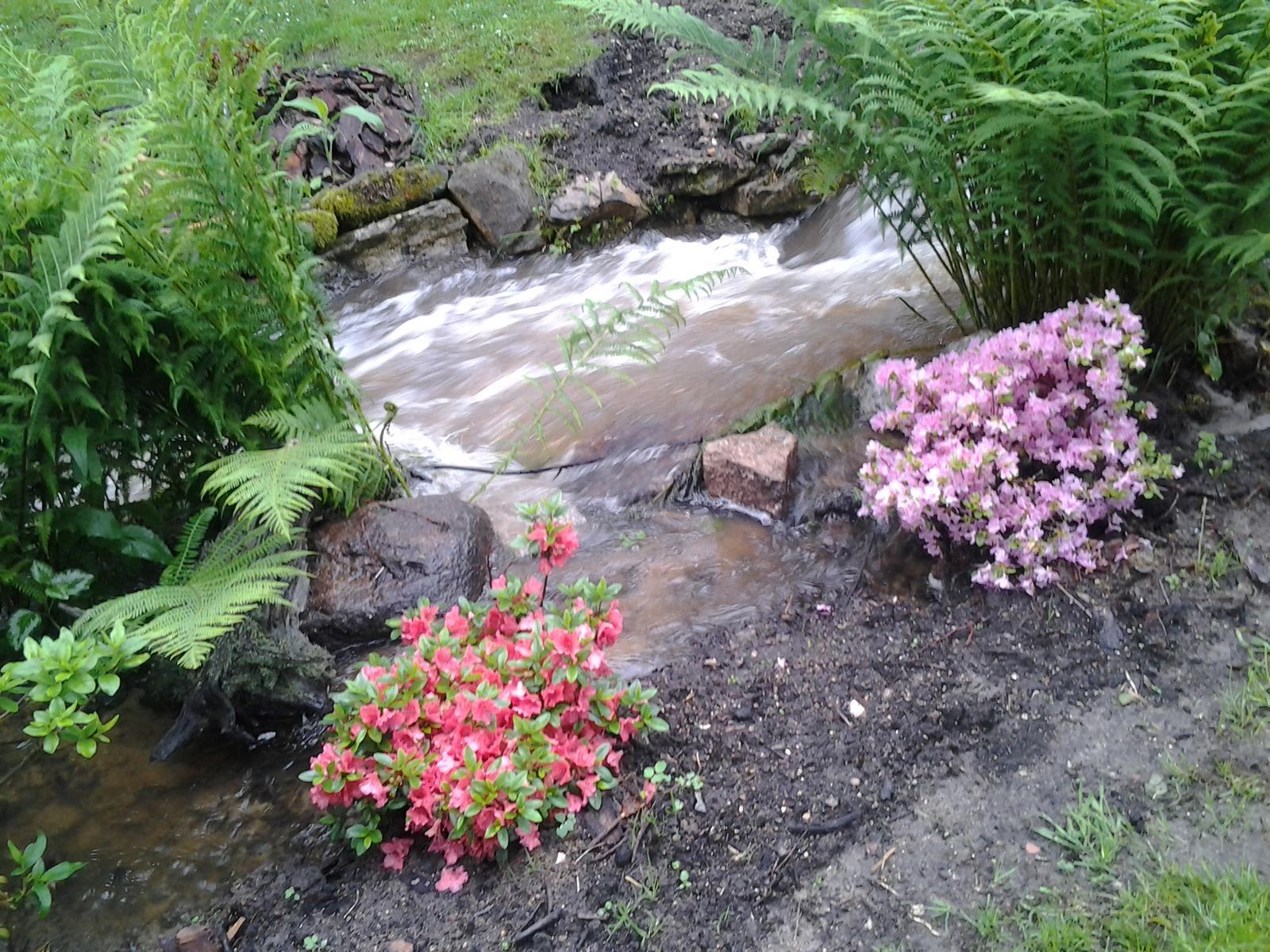 Jihočeská venkovská zahrada. - Potok někdy zlobí,ale azalky se nedaly.