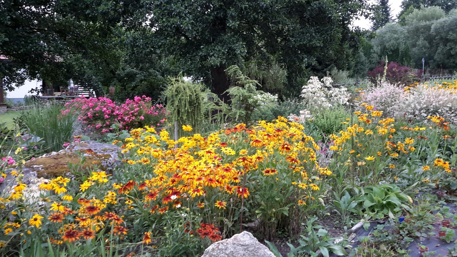 Jihočeská venkovská zahrada. - Když rozkvetou třapatky,je zahrada nejkrásnější zdaleka.