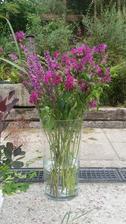 Zavinutku mám ráda pro neobvyklou barvu a trvanlivost květů.