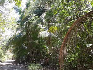 V tropickém suchém pralese.