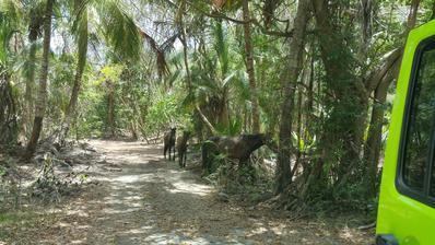 Divocí koně v pralese nebyli vůbec divocí.