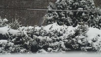 Poznáte na foto něco jiného než stromy a sních?A co to je?