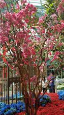 Botanická zahrada v hotelu.