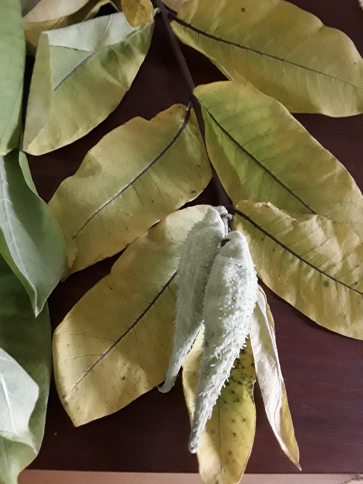 Jihočeská venkovská zahrada. - Koncem léta jsem objevila v příkopě tuto rostlinu,asi ji tam zanesli ptáci.