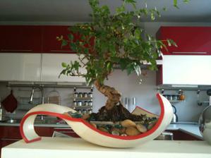 1 koupená bonsajka..