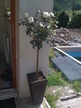 Začali jsme pracovat na zahradě..Já po svým(kytičky)