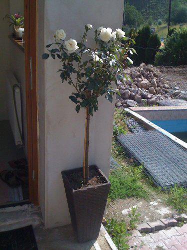 Pokračování našeho stavebního úsilí :)) - Začali jsme pracovat na zahradě..Já po svým(kytičky)