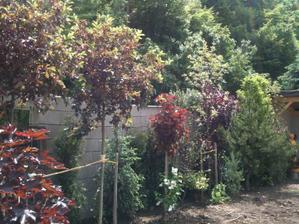 pár nových stromů..
