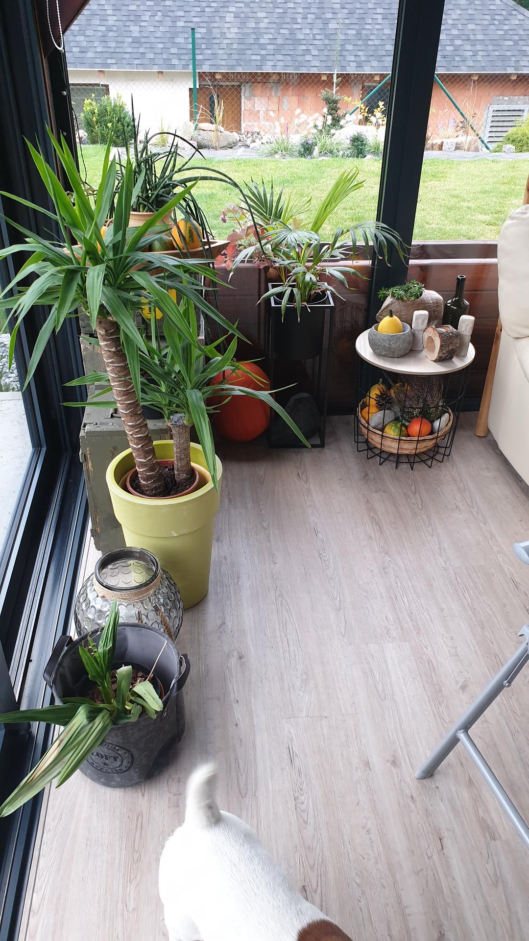 Pergola + zimní zahrada + zahrada - Obrázek č. 14