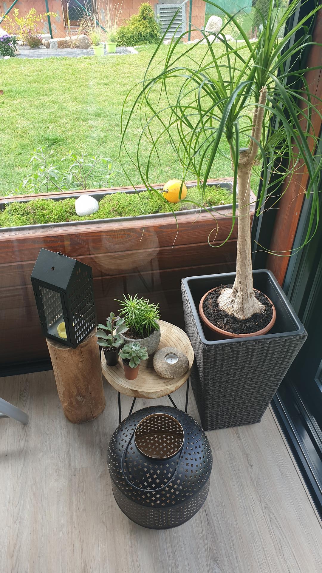 Pergola + zimní zahrada + zahrada - Obrázek č. 17