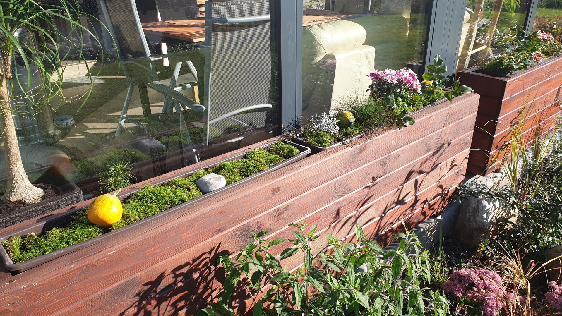 Pergola + zimní zahrada + zahrada - Obrázek č. 22