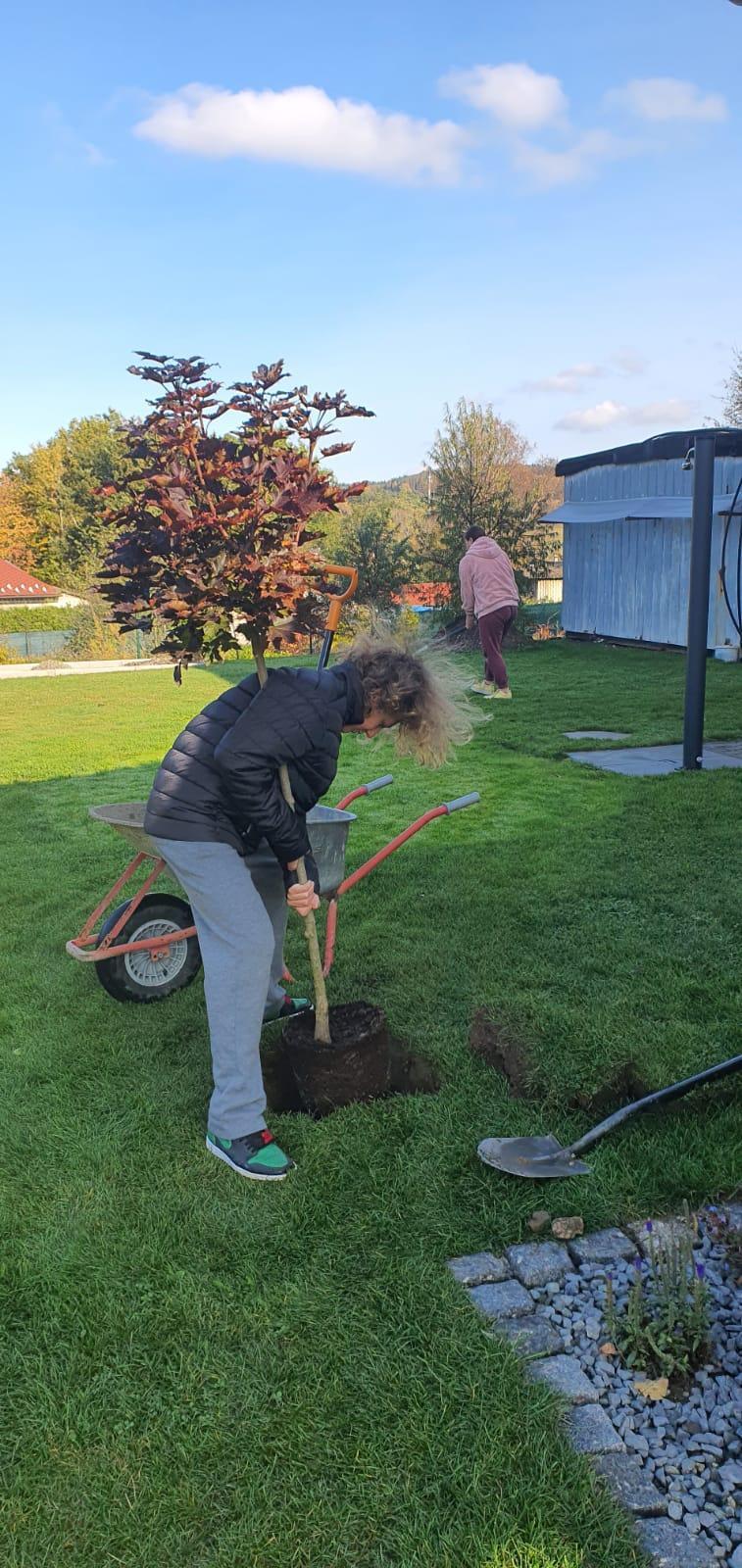 Pergola + zimní zahrada + zahrada - Obrázek č. 33
