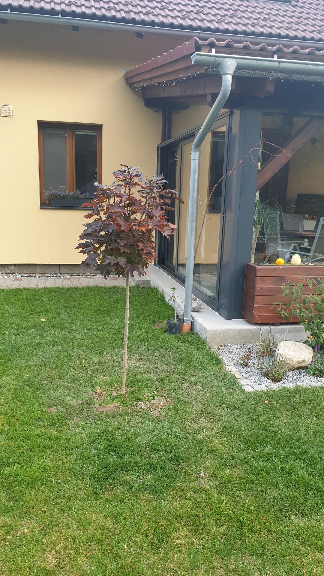 Pergola + zimní zahrada + zahrada - náš přírůstek