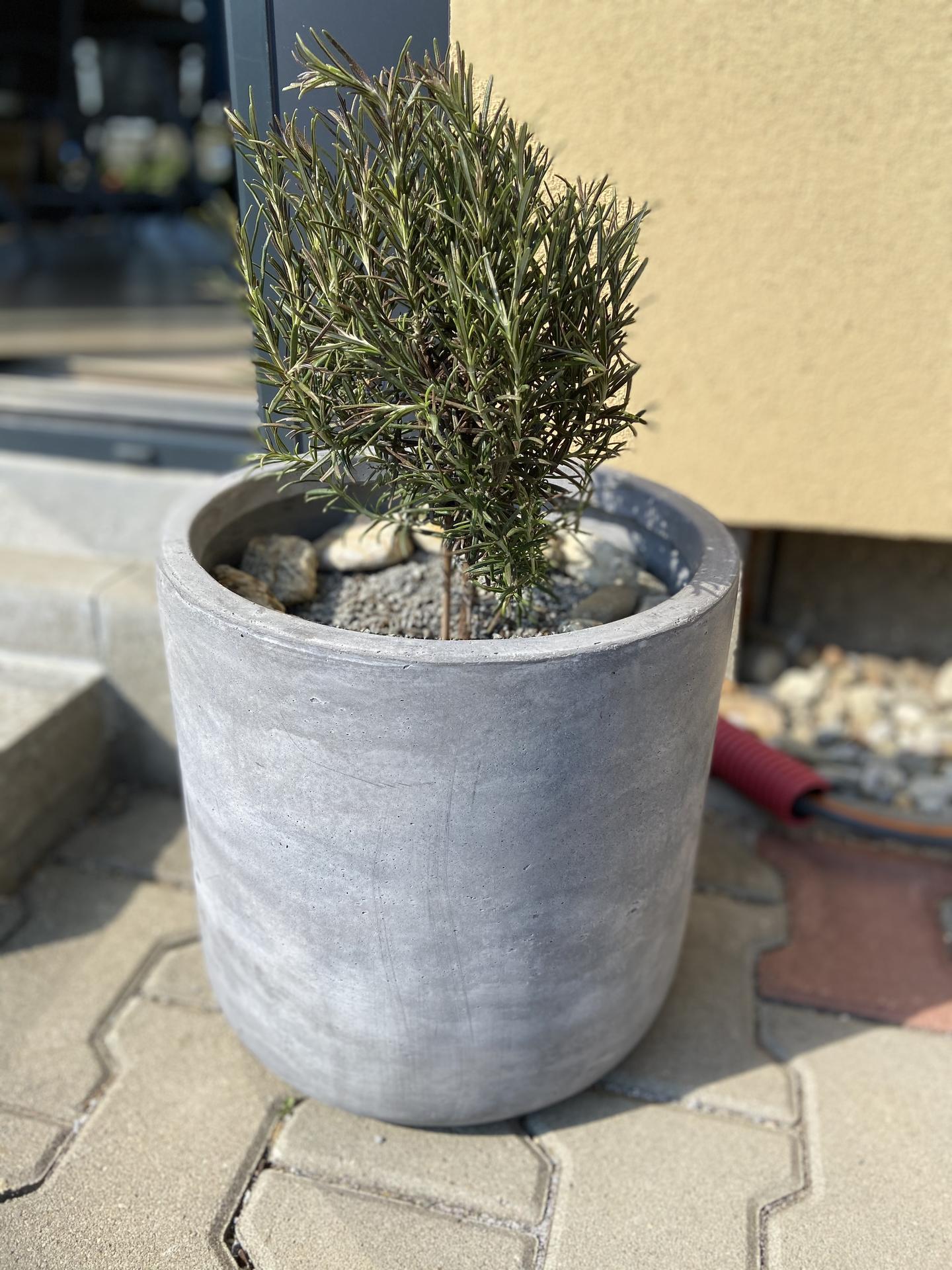 Pergola + zimní zahrada + zahrada - Obrázek č. 40
