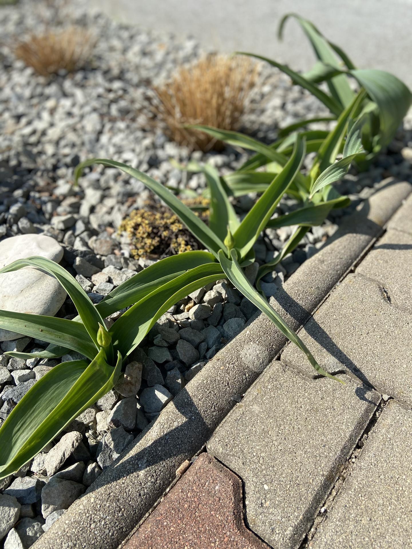 Pergola + zimní zahrada + zahrada - Obrázek č. 44