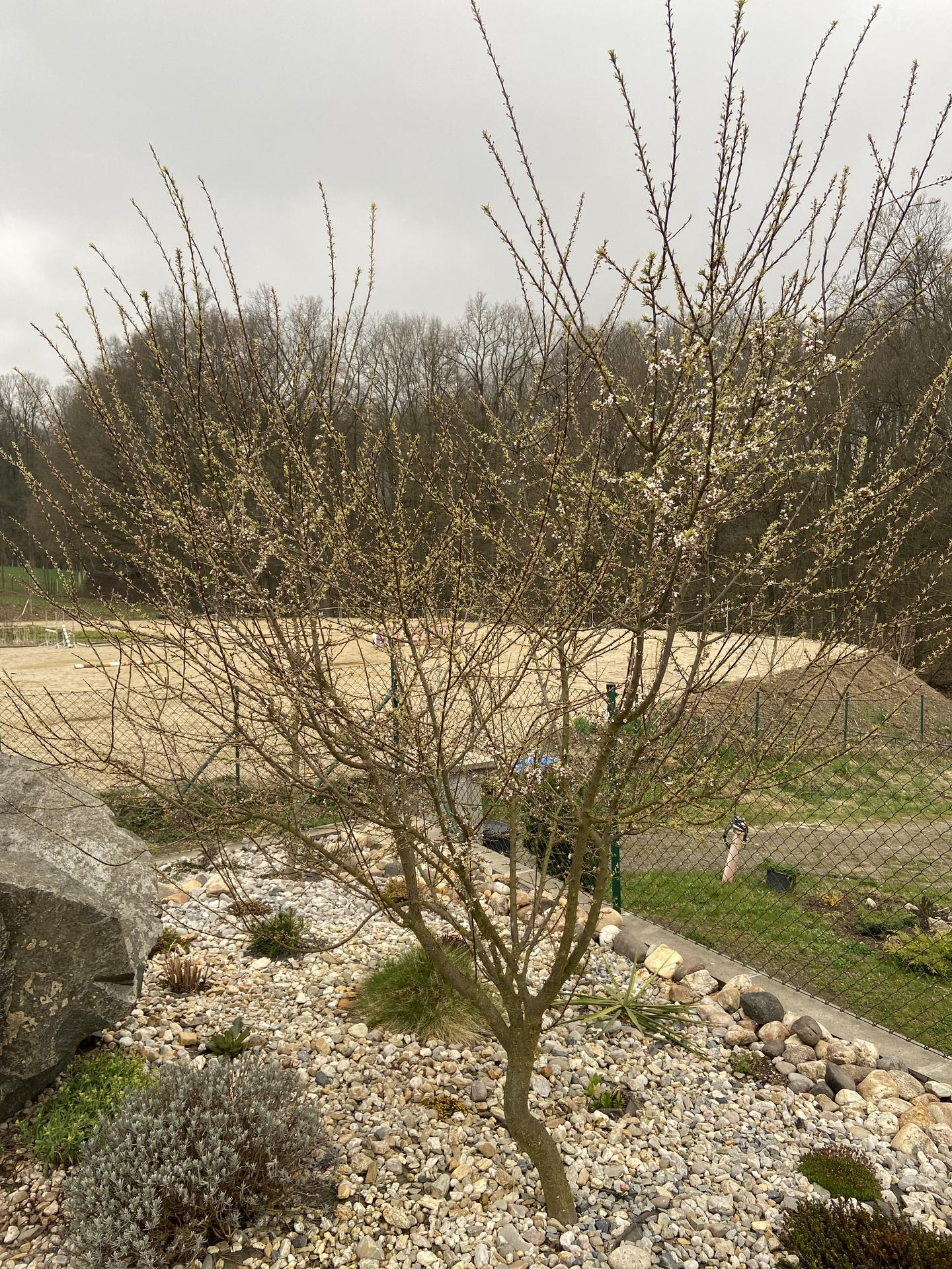 Pergola + zimní zahrada + zahrada - Tak to je náš líbací strom