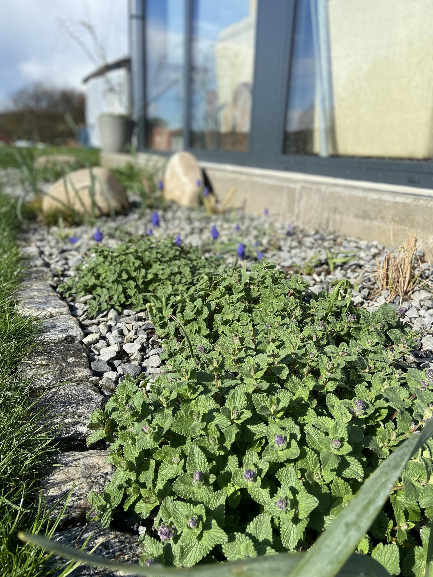Pergola + zimní zahrada + zahrada - Obrázek č. 55