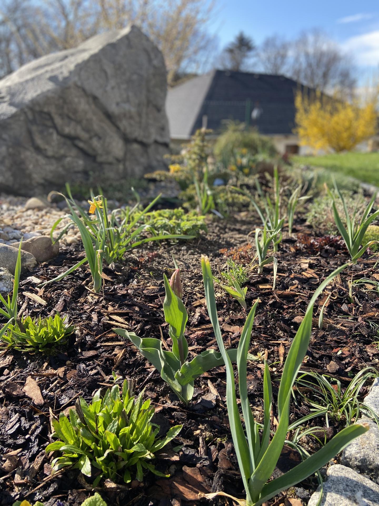 Pergola + zimní zahrada + zahrada - Obrázek č. 57