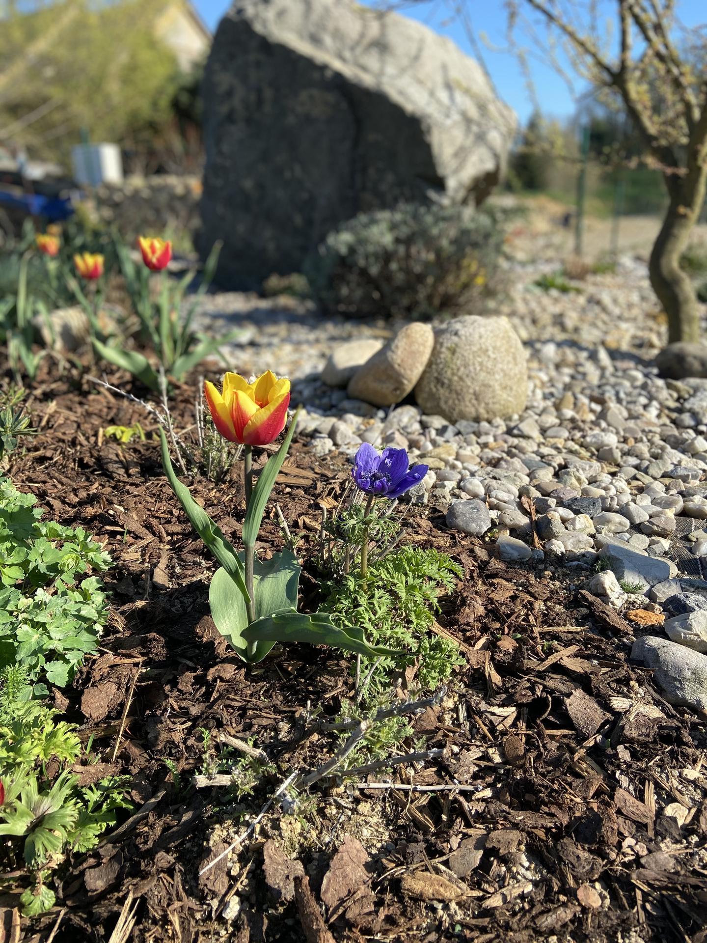Pergola + zimní zahrada + zahrada - Obrázek č. 60