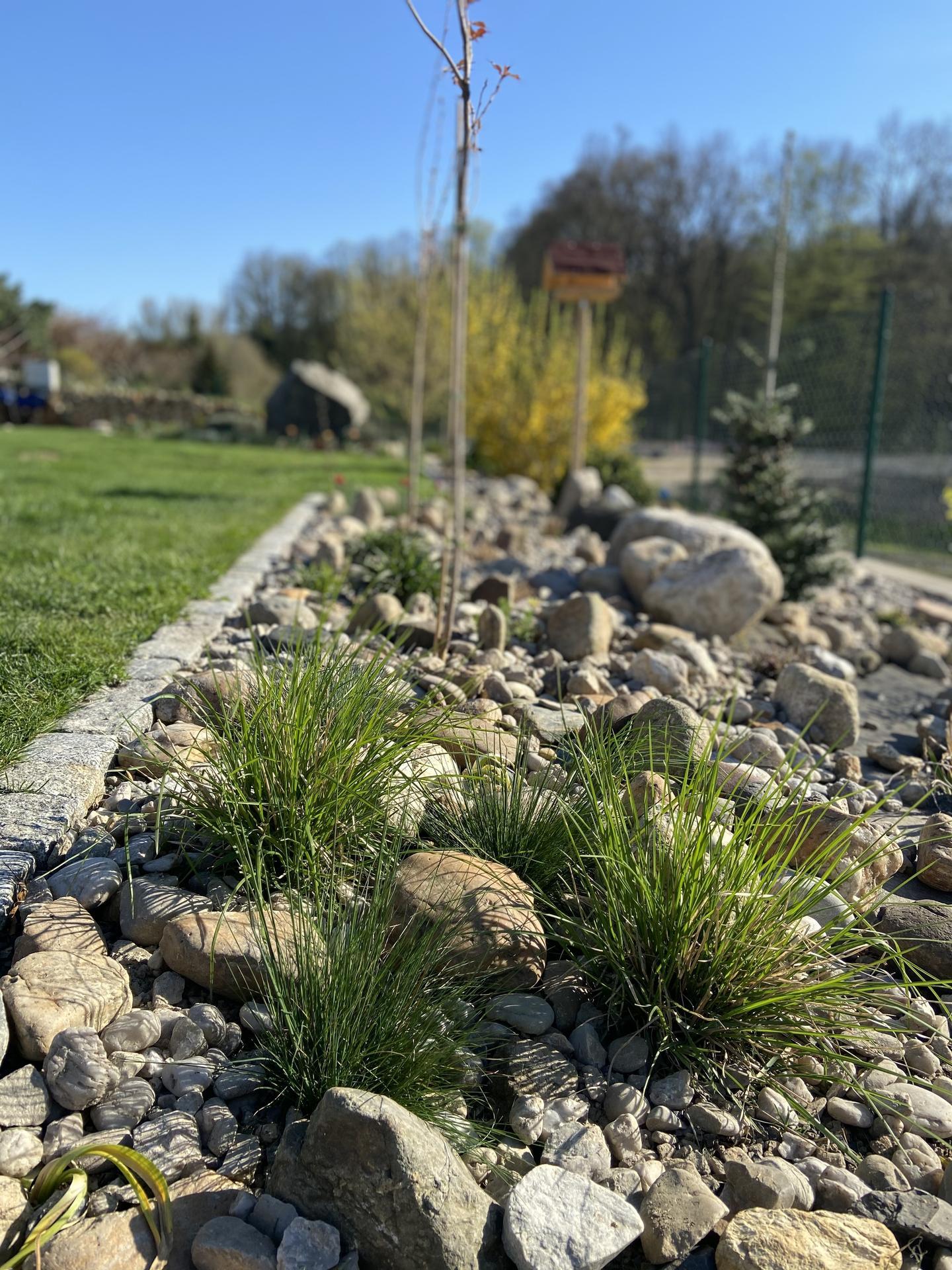 Pergola + zimní zahrada + zahrada - Loňské trávy. Zatím nic moc