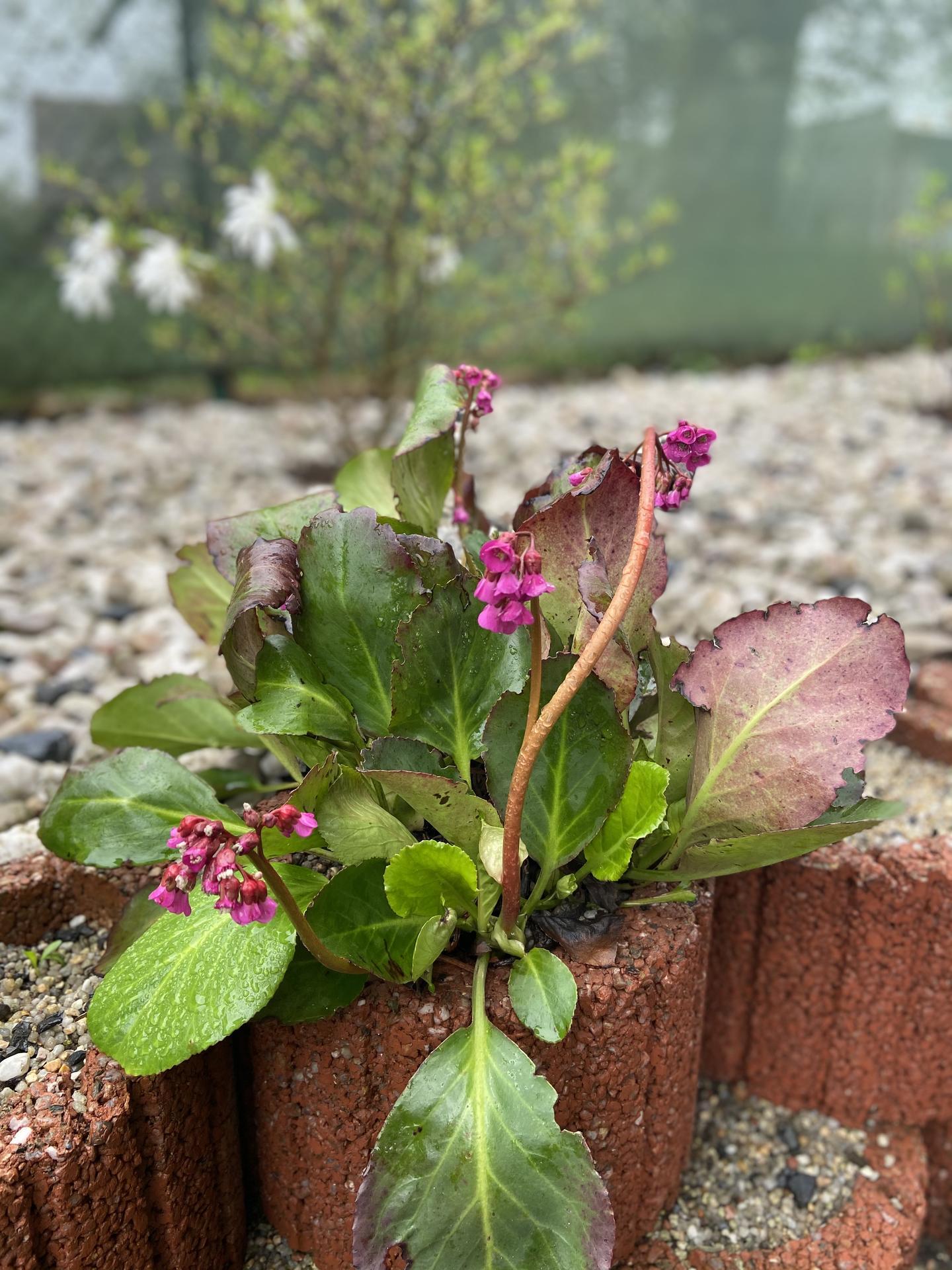 Pergola + zimní zahrada + zahrada - Obrázek č. 70