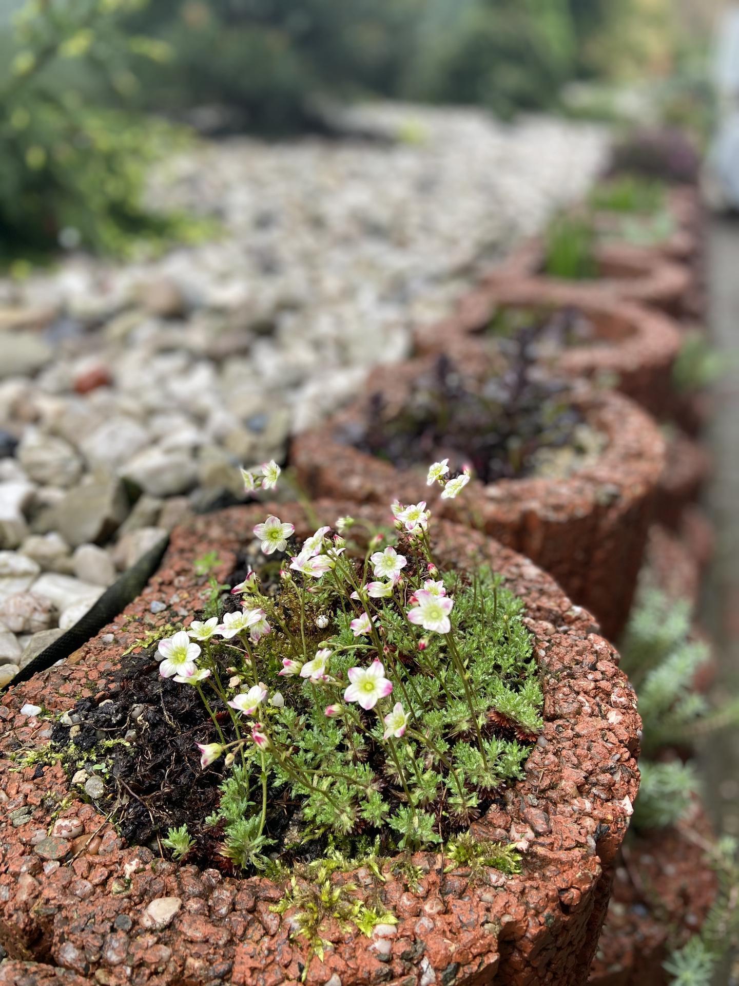 Pergola + zimní zahrada + zahrada - Obrázek č. 73
