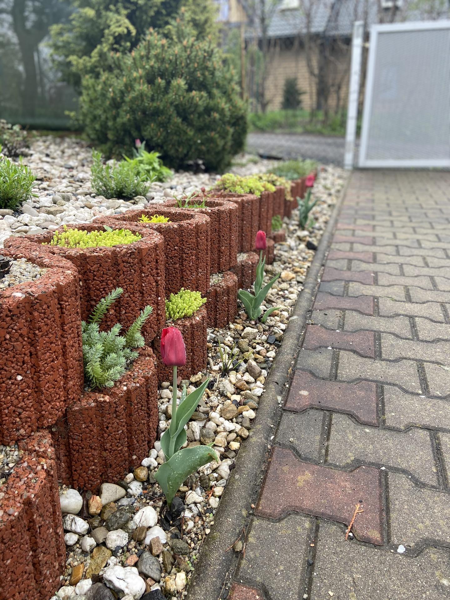 Pergola + zimní zahrada + zahrada - Obrázek č. 72