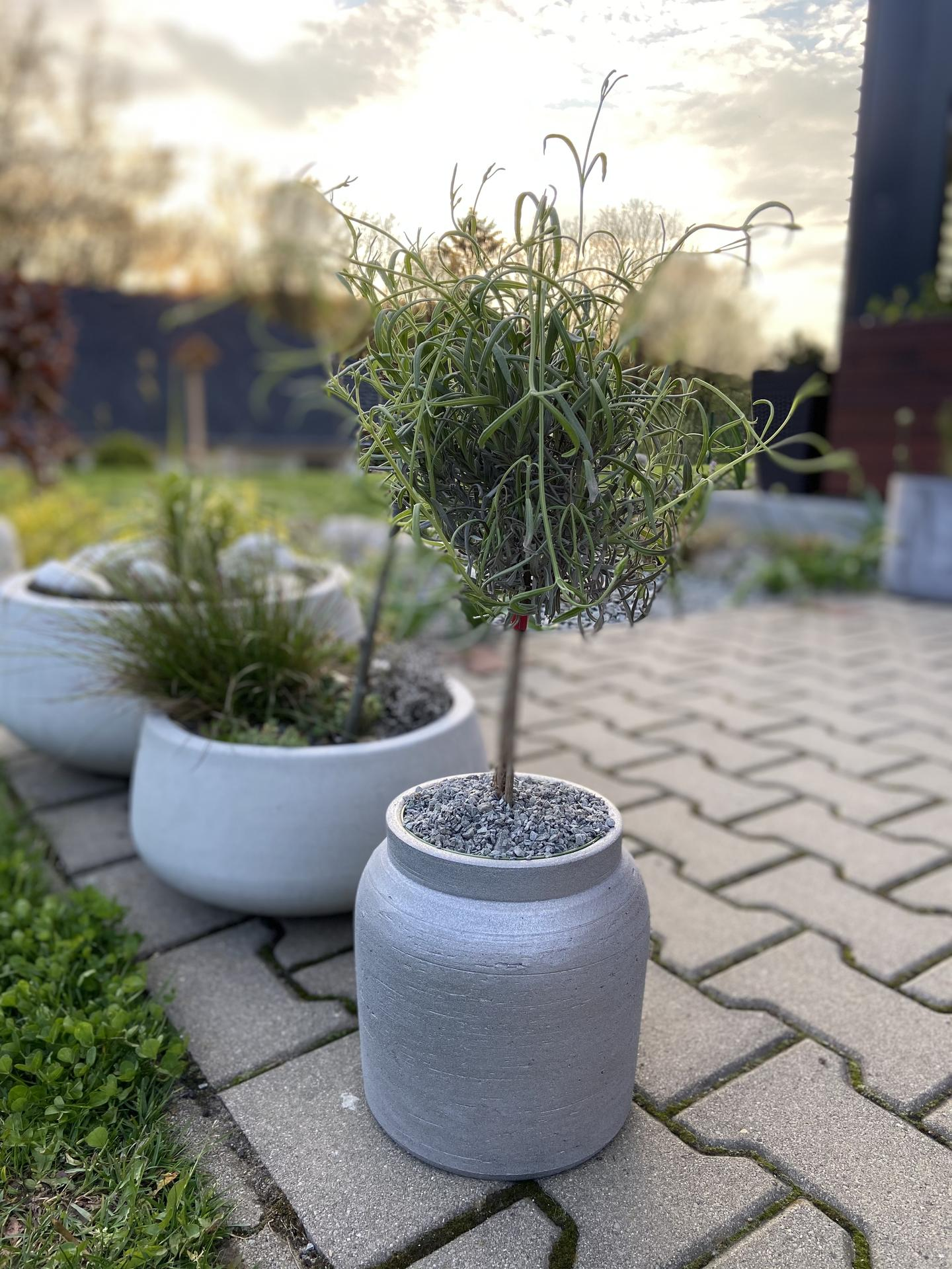 Pergola + zimní zahrada + zahrada - levandule na kmínku