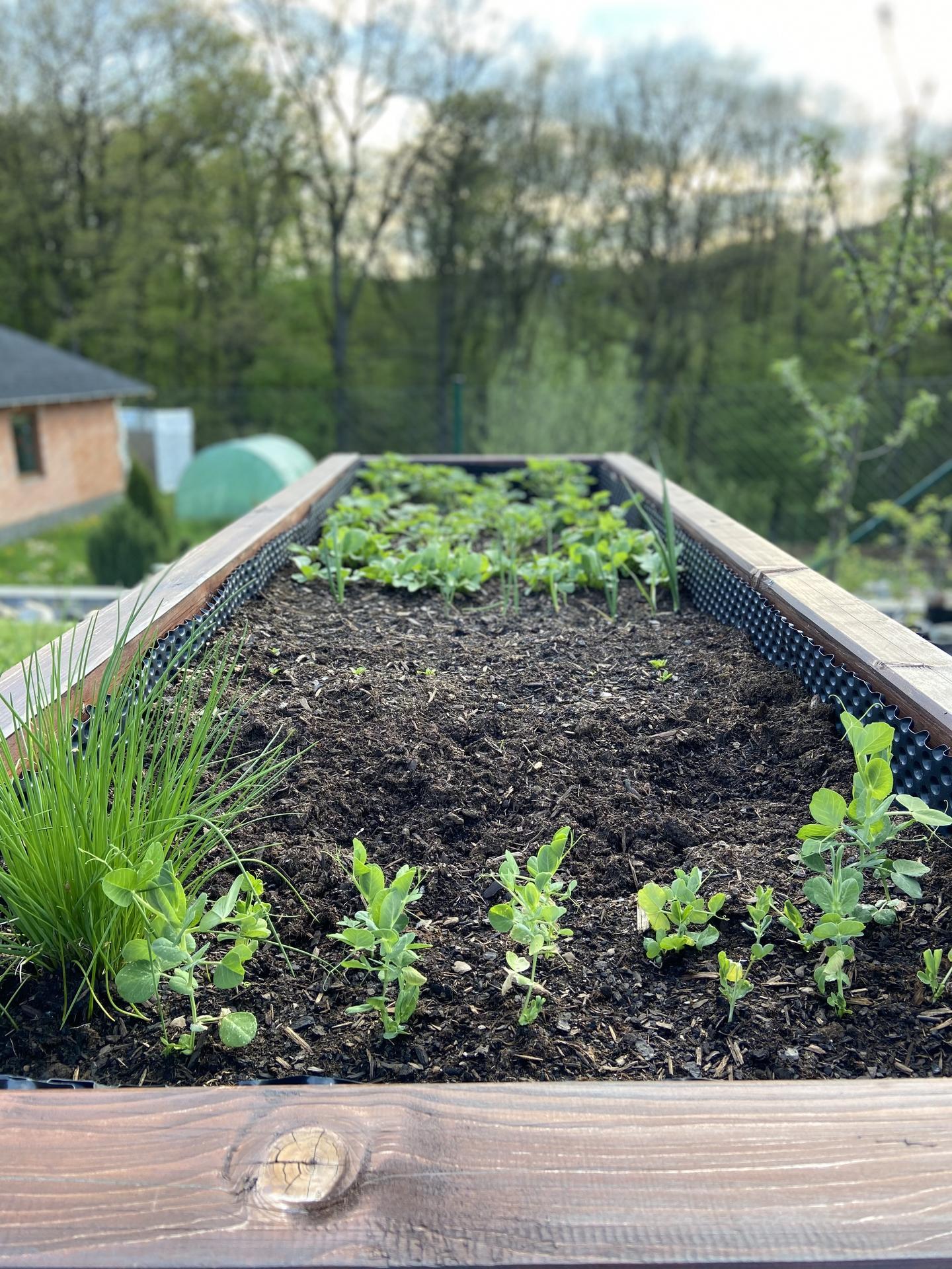 Pergola + zimní zahrada + zahrada - vyvýšený záhon, zatím ředkvičky a leze salát. Hrášek je zatím při zemi