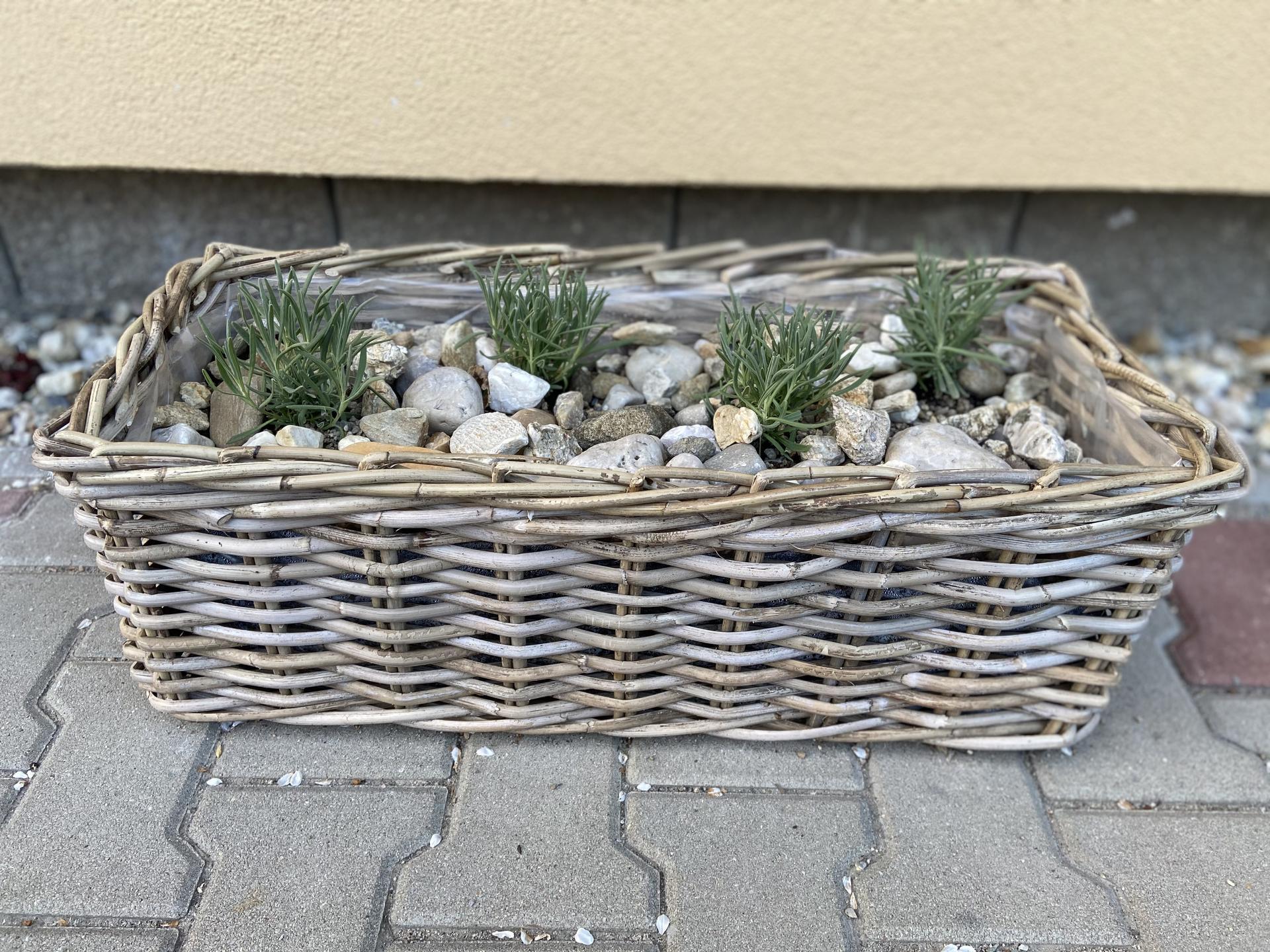 Pergola + zimní zahrada + zahrada - Obrázek č. 76