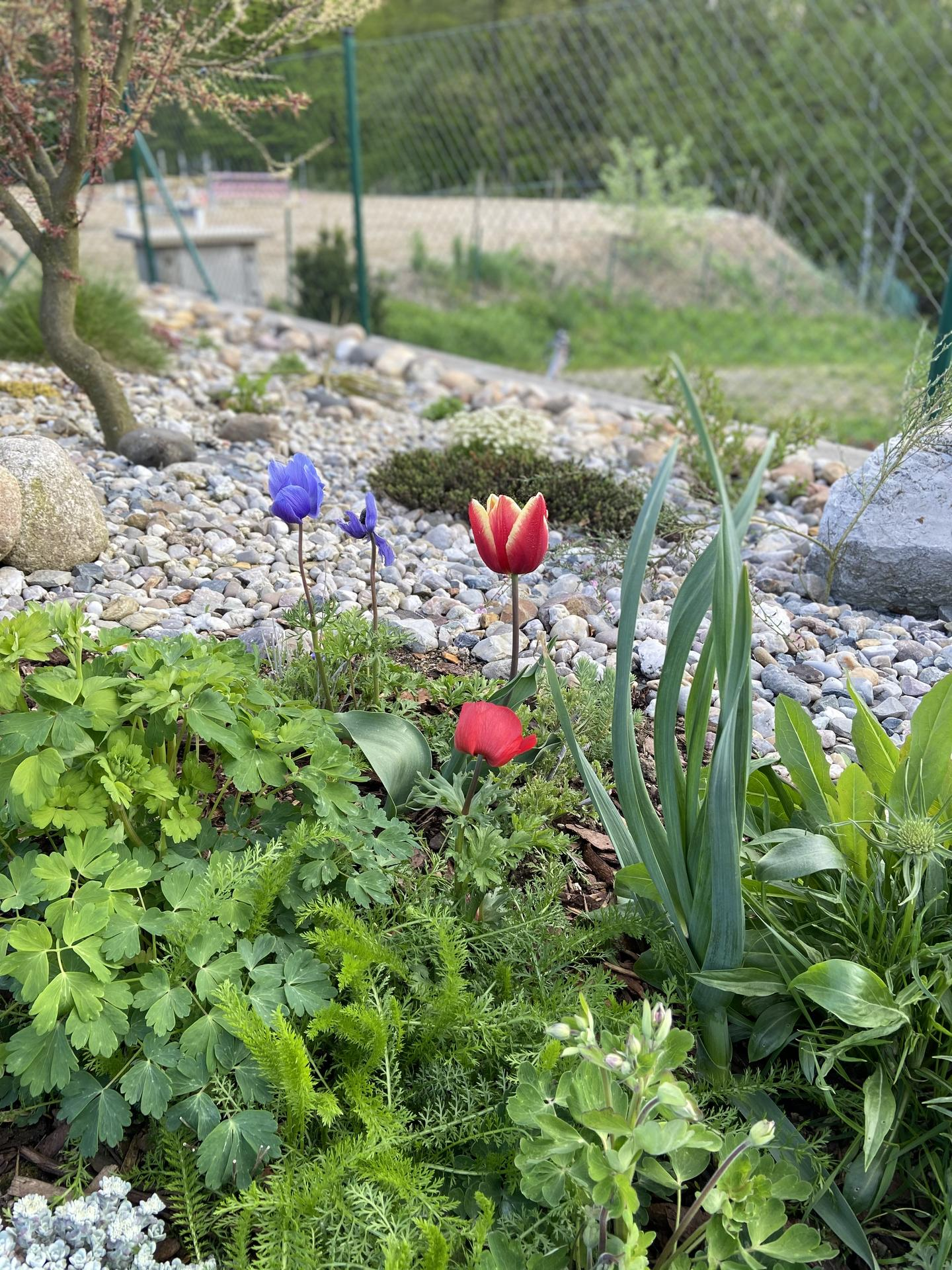 Pergola + zimní zahrada + zahrada - to modré ani nevím co je, sázela jsem cibuloviny z Lidlu a zahodila obal