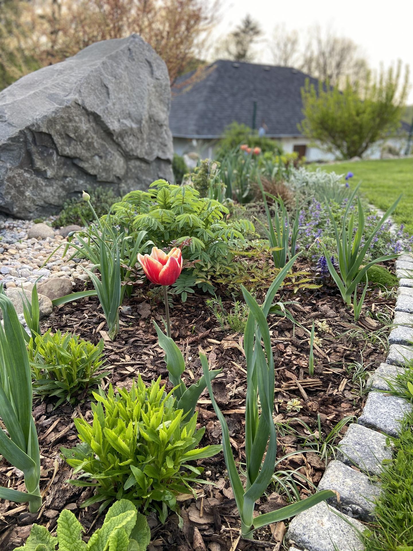 Pergola + zimní zahrada + zahrada - ještě čekám na česneky a jinak záhon už začíná pučet. Jen včera po tom vlhku a dešti nastoupili šneci a sbírala je. Oni snad žerou všechno. Tak jsem znechucená a čekám, co tam zbyde |-|