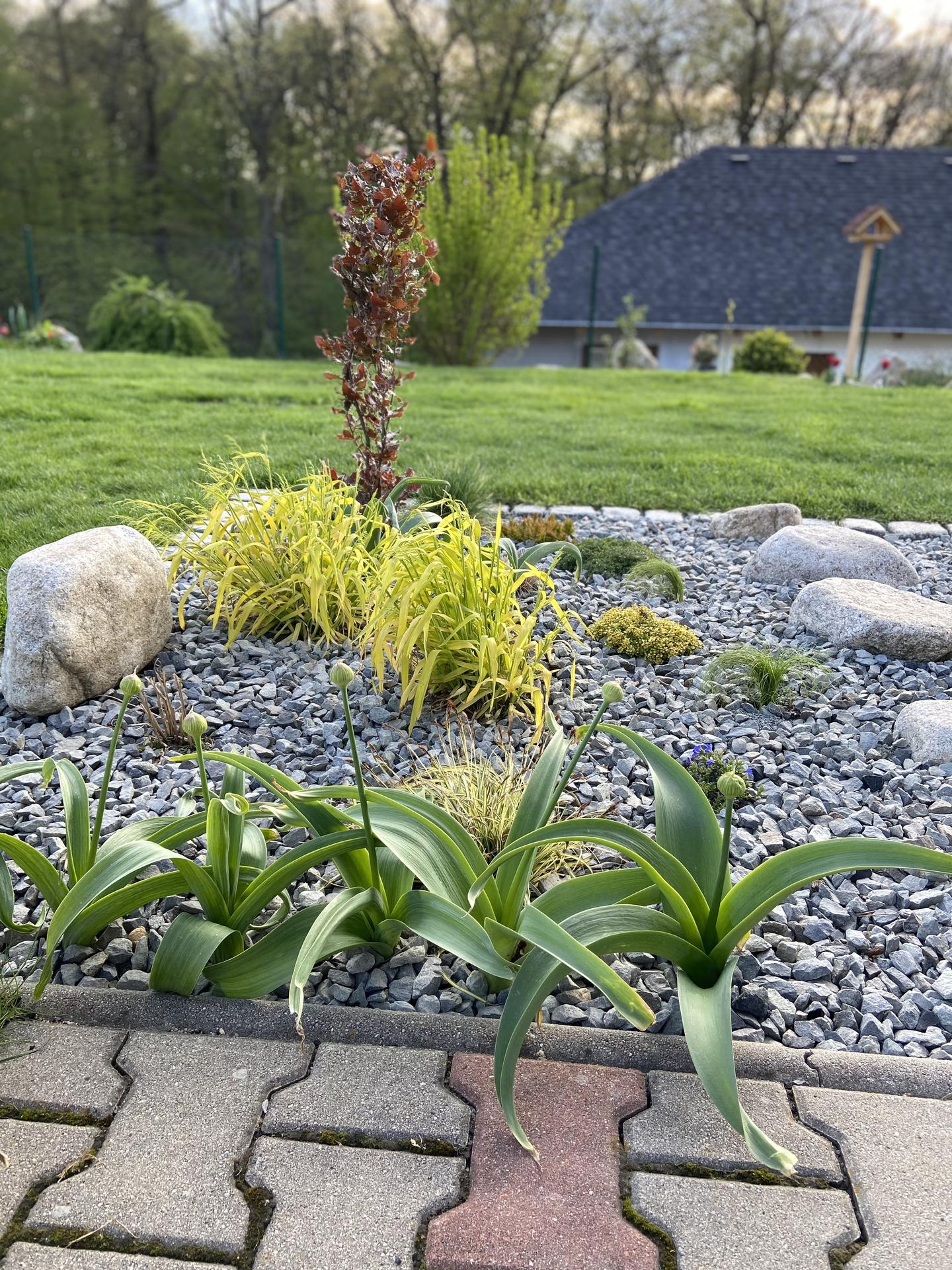Pergola + zimní zahrada + zahrada - Obrázek č. 90
