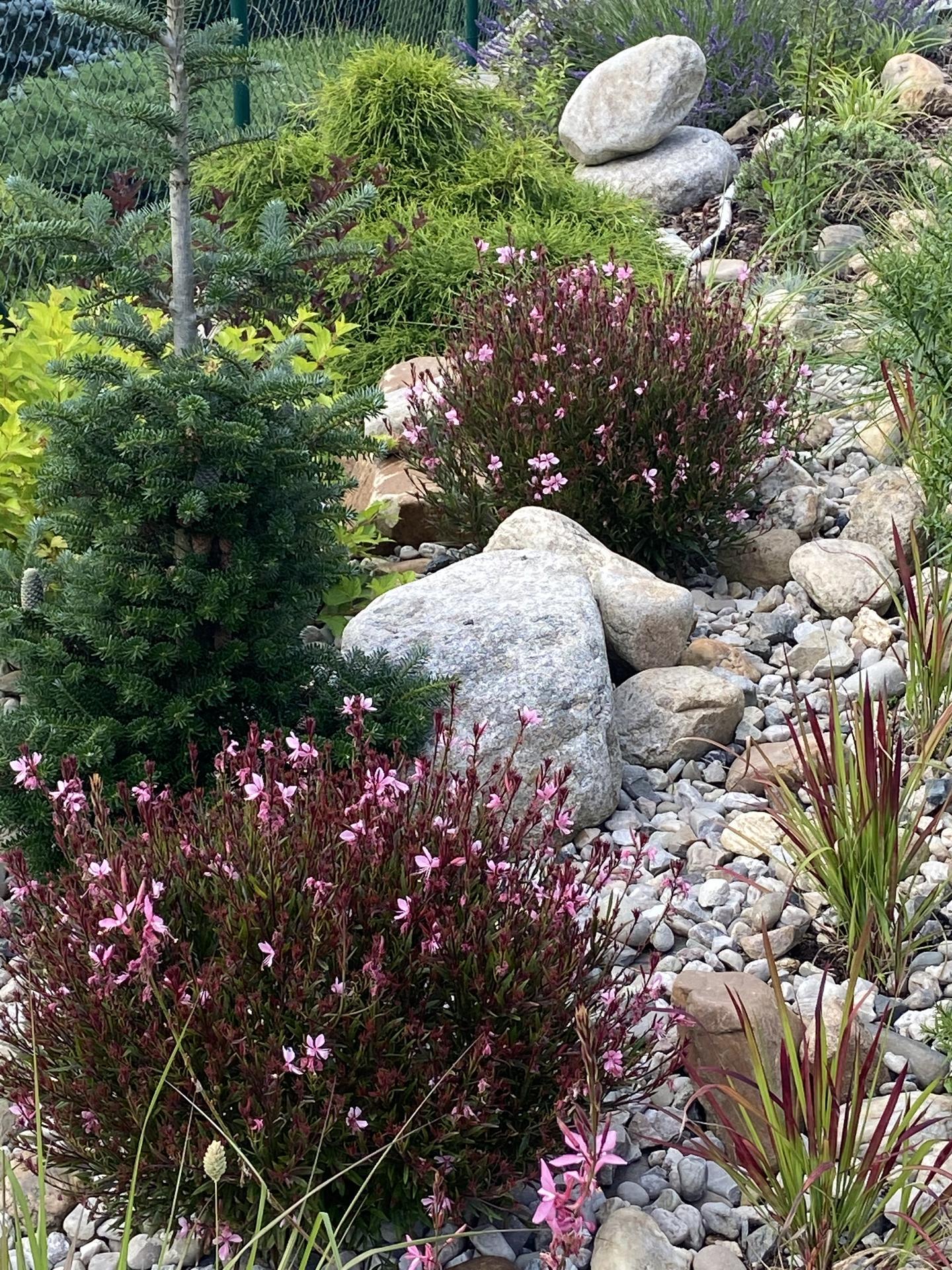 Pergola + zimní zahrada + zahrada - kvetoucí růžová gaura