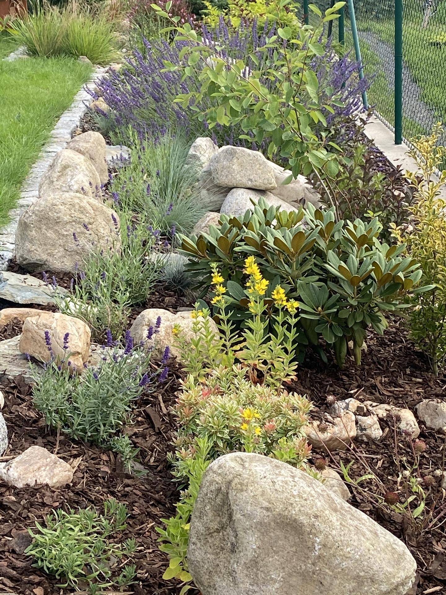 Pergola + zimní zahrada + zahrada - další pás levandulí