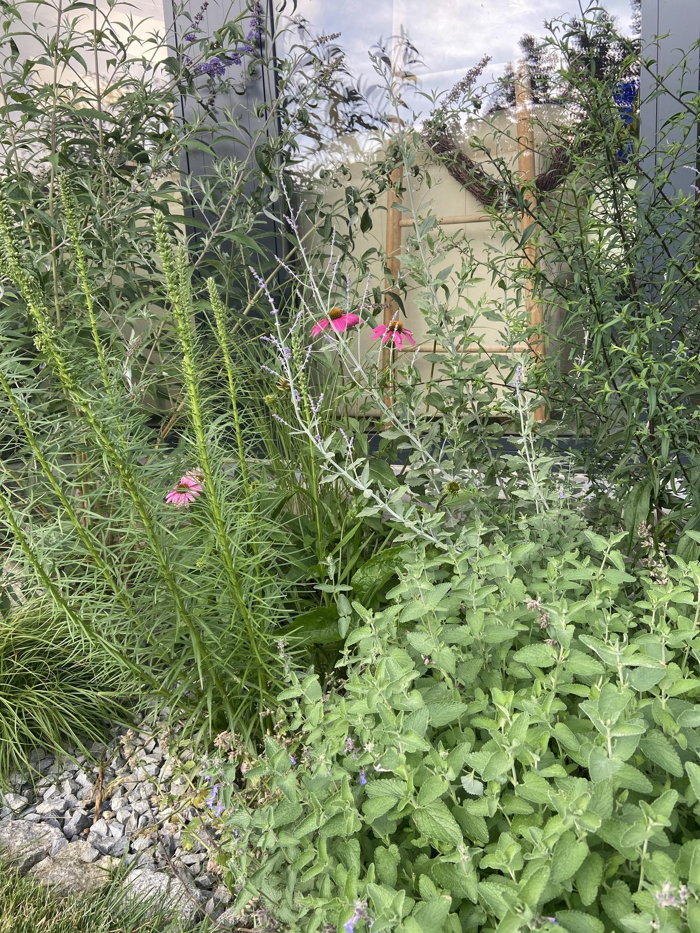 Pergola + zimní zahrada + zahrada - Obrázek č. 208