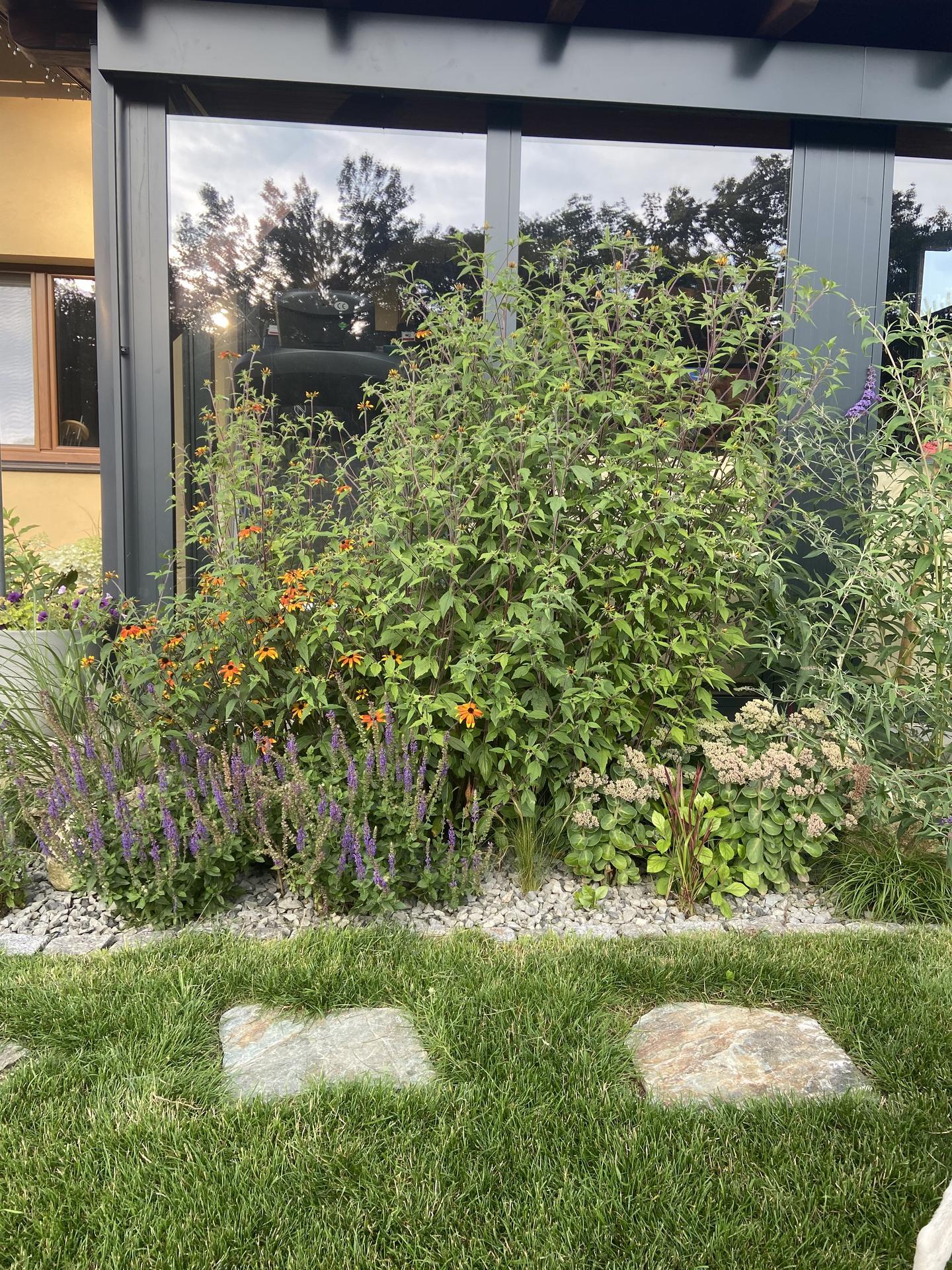 Pergola + zimní zahrada + zahrada - Echinacea je skoro dvoumetrova