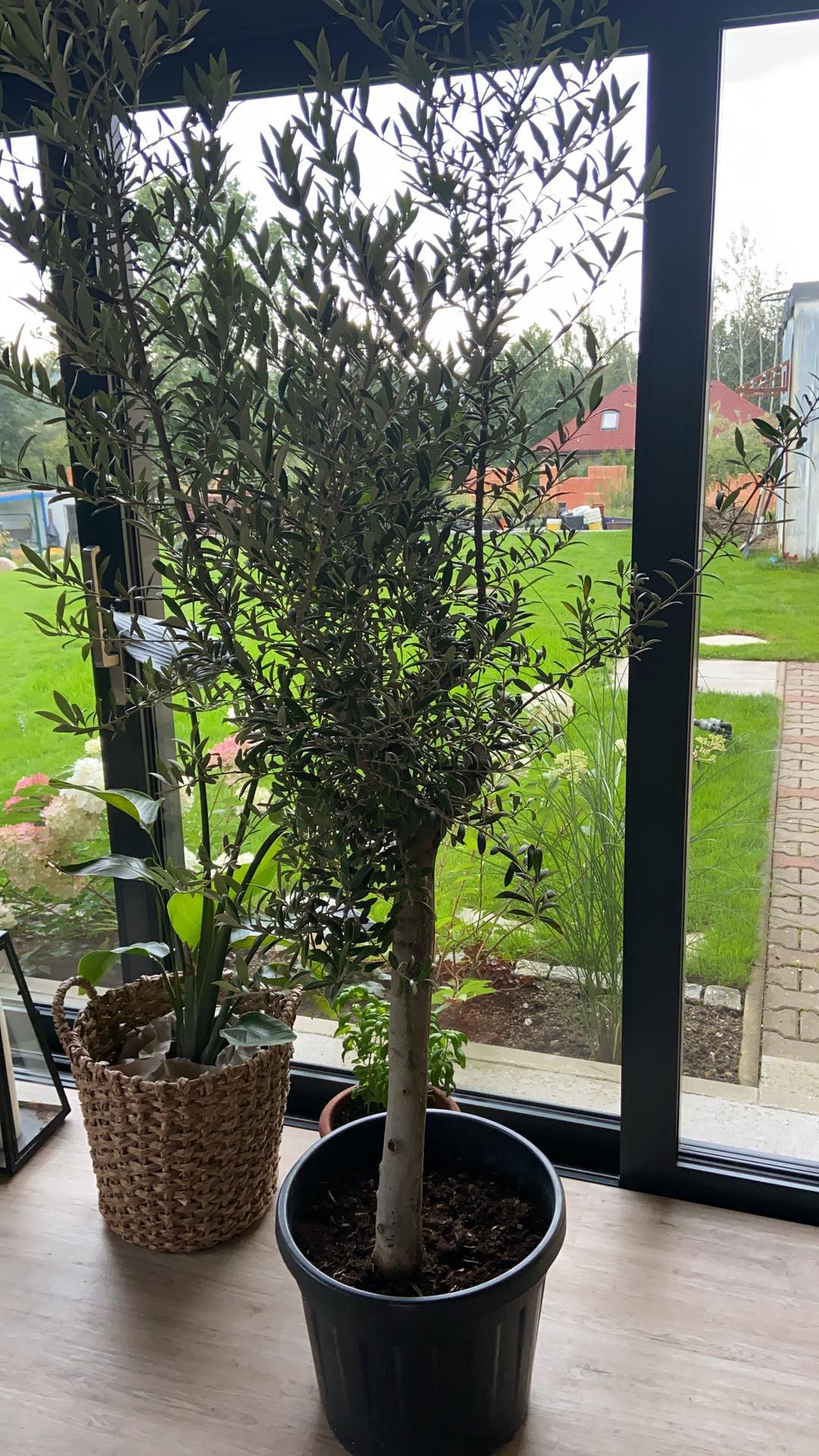 Pergola + zimní zahrada + zahrada - můj vysněný