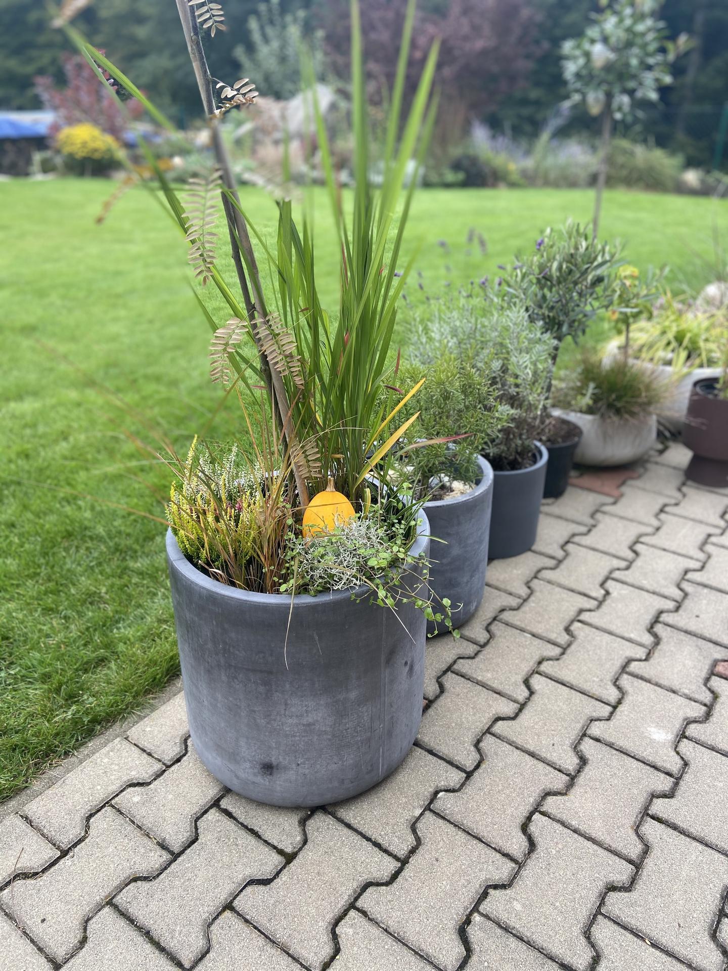 Pergola + zimní zahrada + zahrada - podzimní ladění