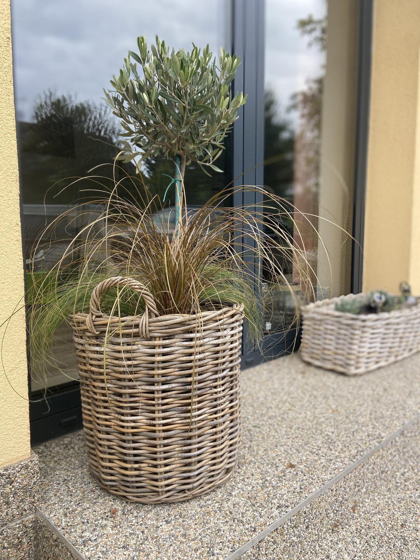 Pergola + zimní zahrada + zahrada - malý bráška, který nahradí velkého
